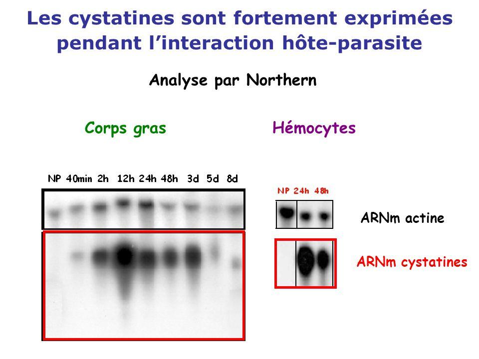 Les cystatines sont fortement exprimées pendant l'interaction hôte-parasite