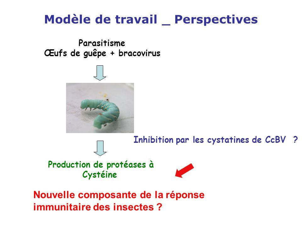 Modèle de travail _ Perspectives