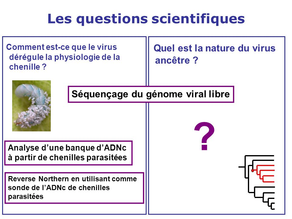 Les questions scientifiques