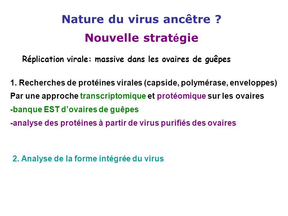 Nature du virus ancêtre Nouvelle stratégie