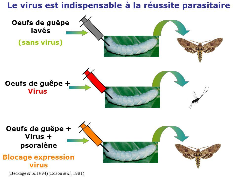 Le virus est indispensable à la réussite parasitaire