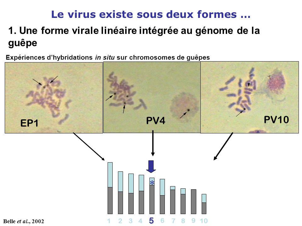 Le virus existe sous deux formes …