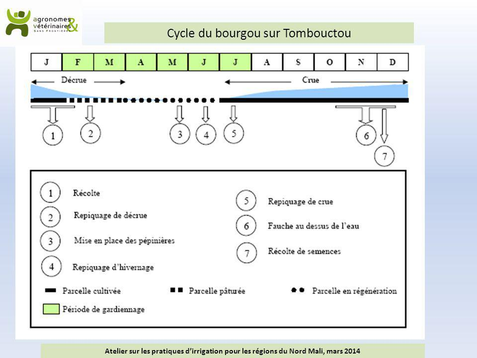 Cycle du bourgou sur Tombouctou