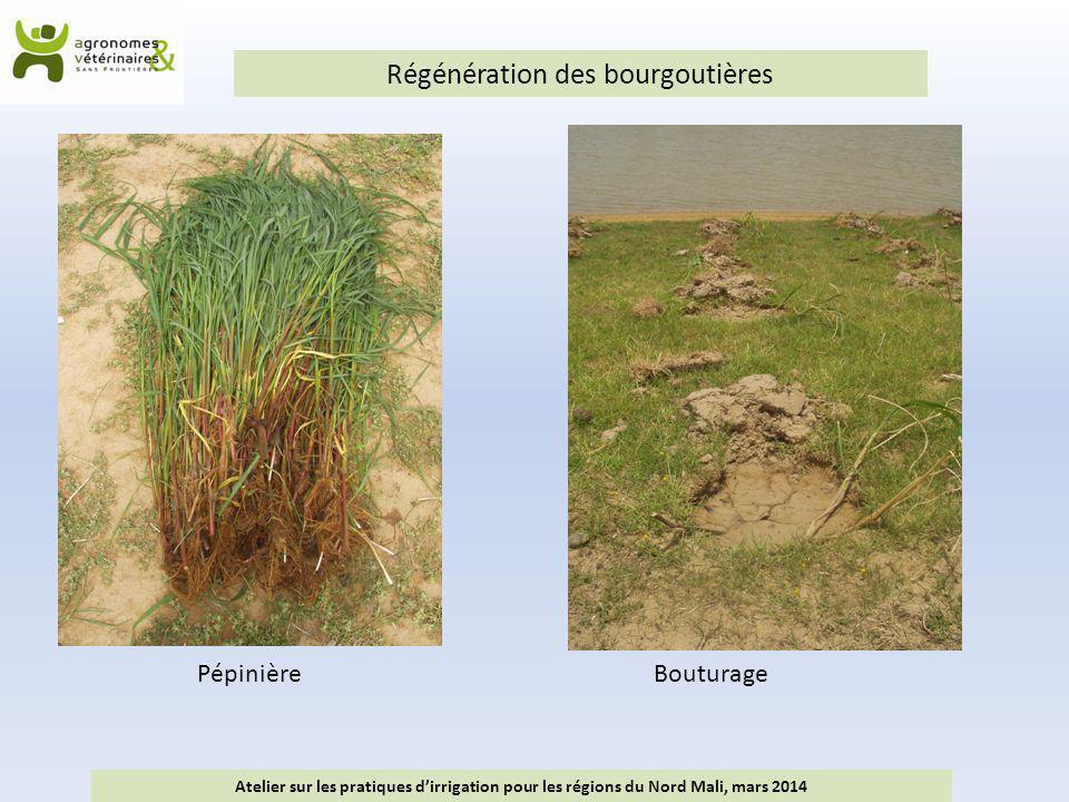 Régénération des bourgoutières