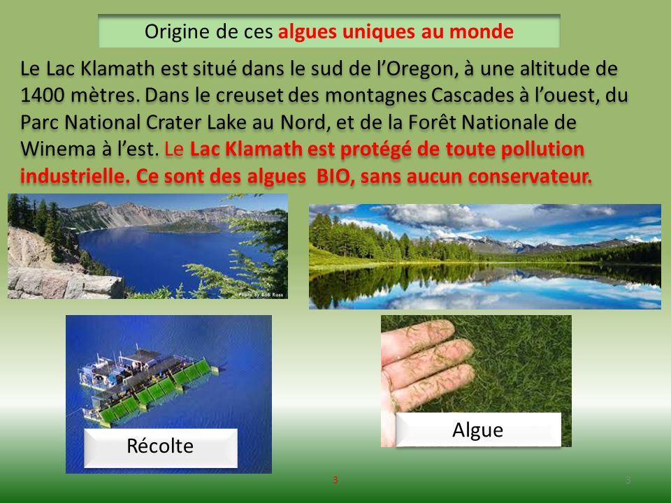 Origine de ces algues uniques au monde