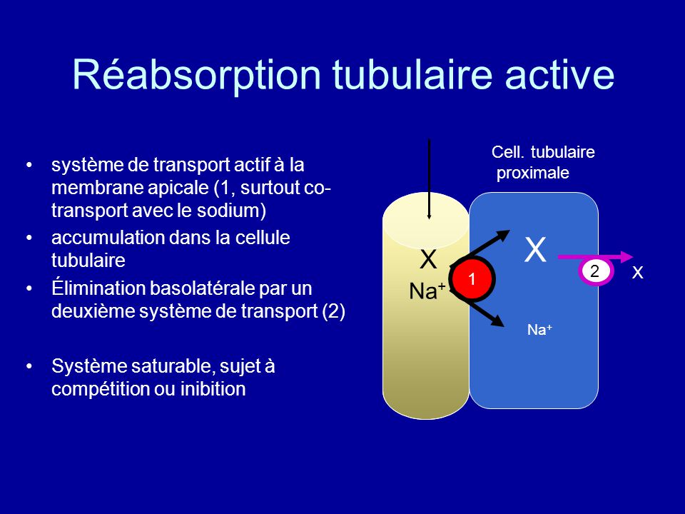 Réabsorption tubulaire active