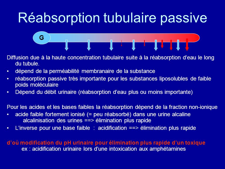 Réabsorption tubulaire passive