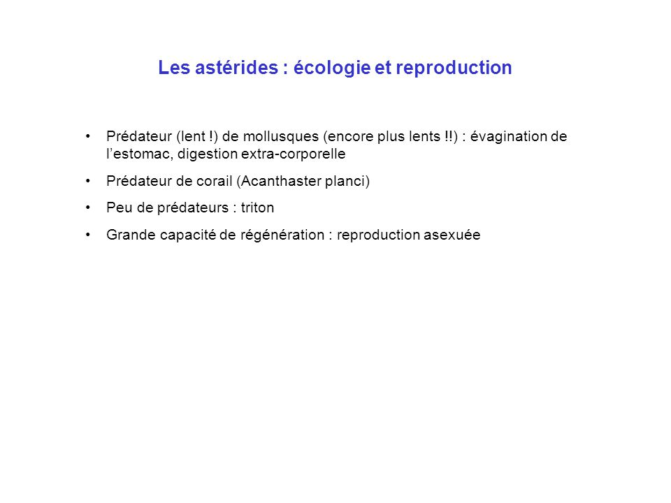 Les astérides : écologie et reproduction
