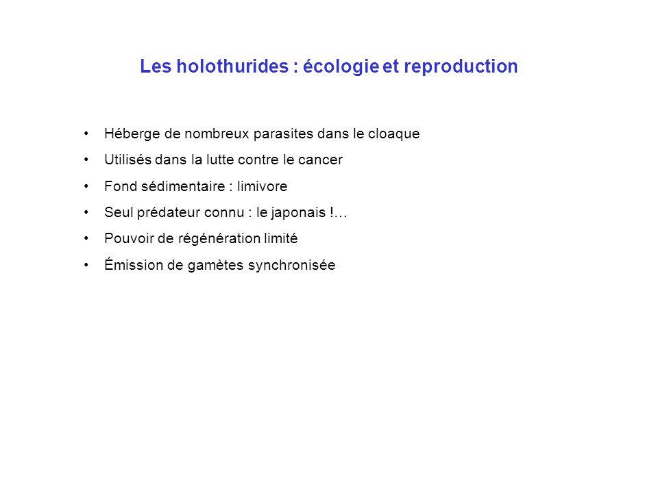 Les holothurides : écologie et reproduction