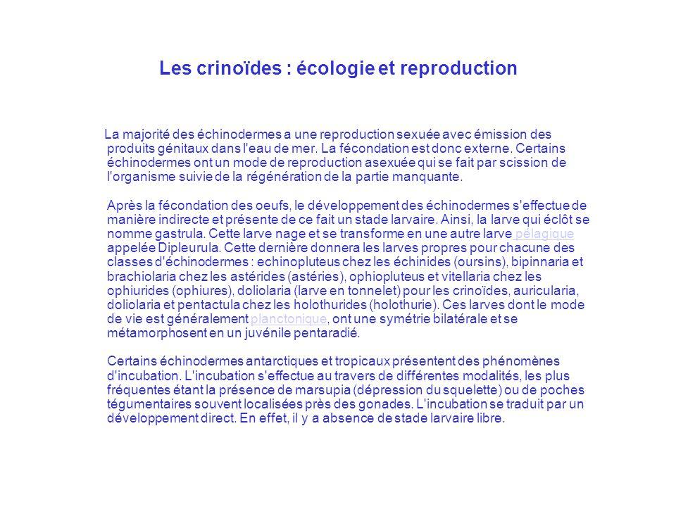 Les crinoïdes : écologie et reproduction