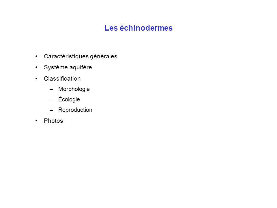 Les échinodermes Caractéristiques générales Système aquifère