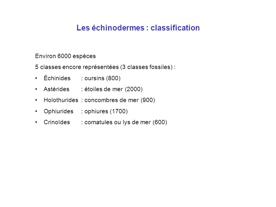 Les échinodermes : classification