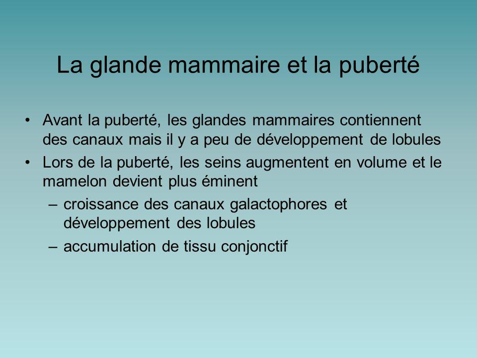 La glande mammaire et la puberté