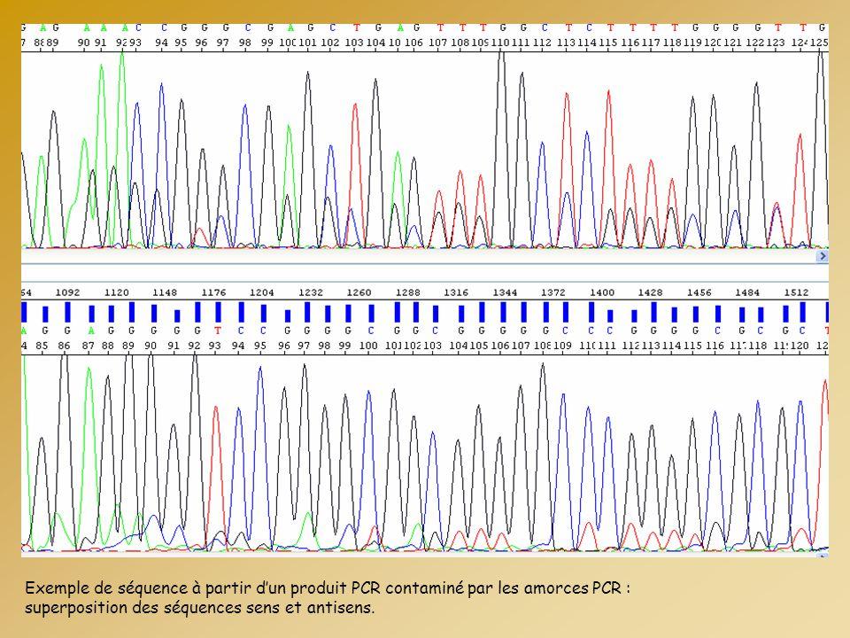 Exemple de séquence à partir d'un produit PCR contaminé par les amorces PCR :