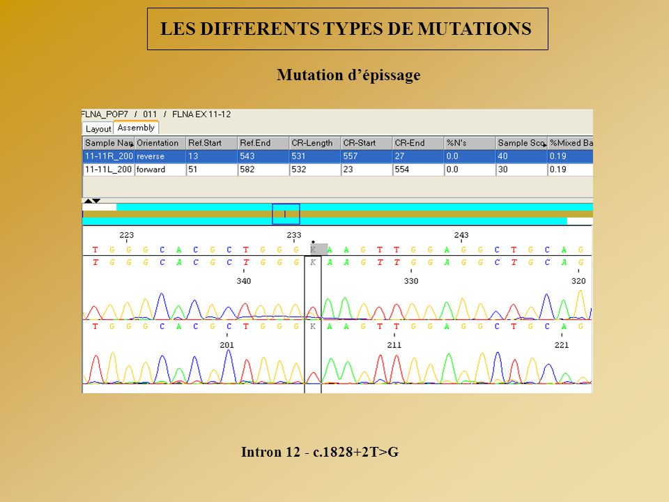 LES DIFFERENTS TYPES DE MUTATIONS