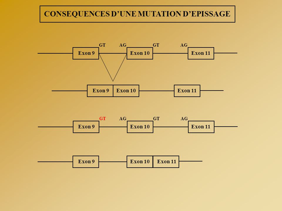 CONSEQUENCES D'UNE MUTATION D'EPISSAGE