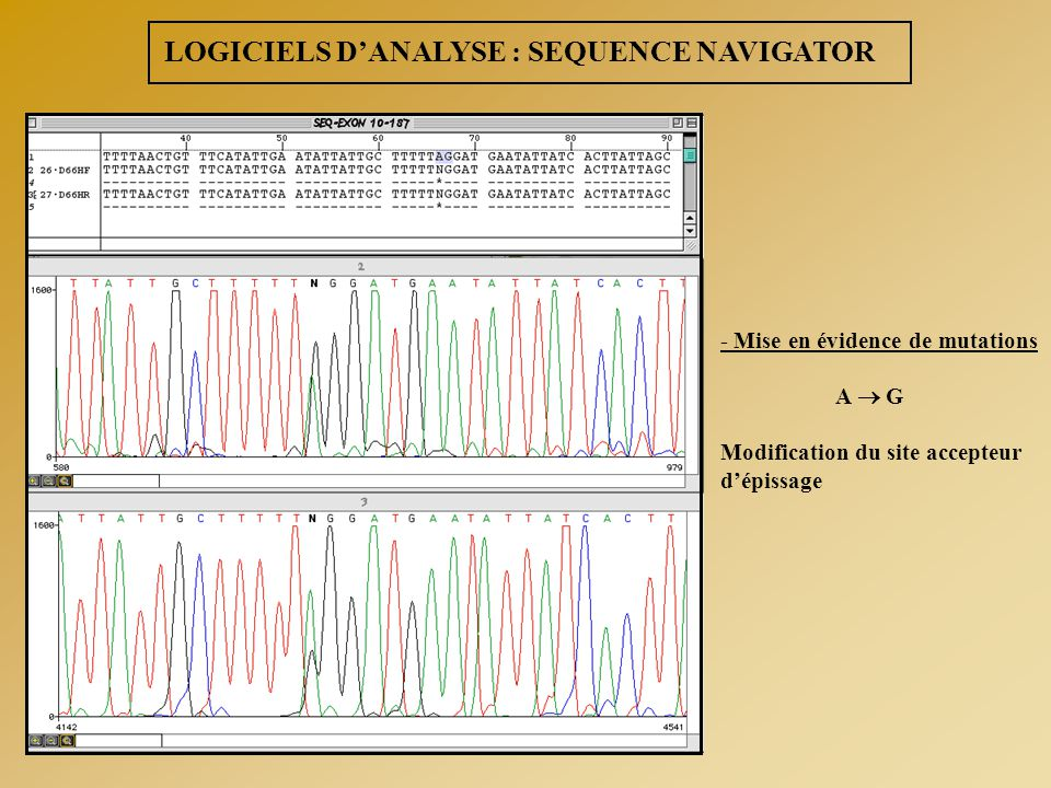 LOGICIELS D'ANALYSE : SEQUENCE NAVIGATOR