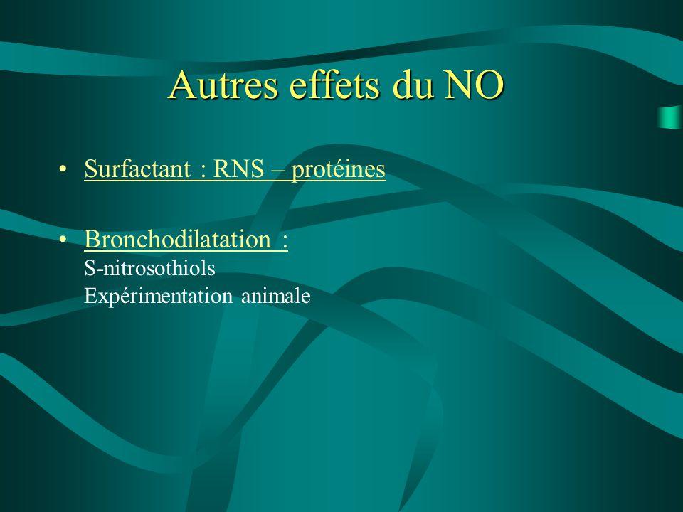 Autres effets du NO Surfactant : RNS – protéines