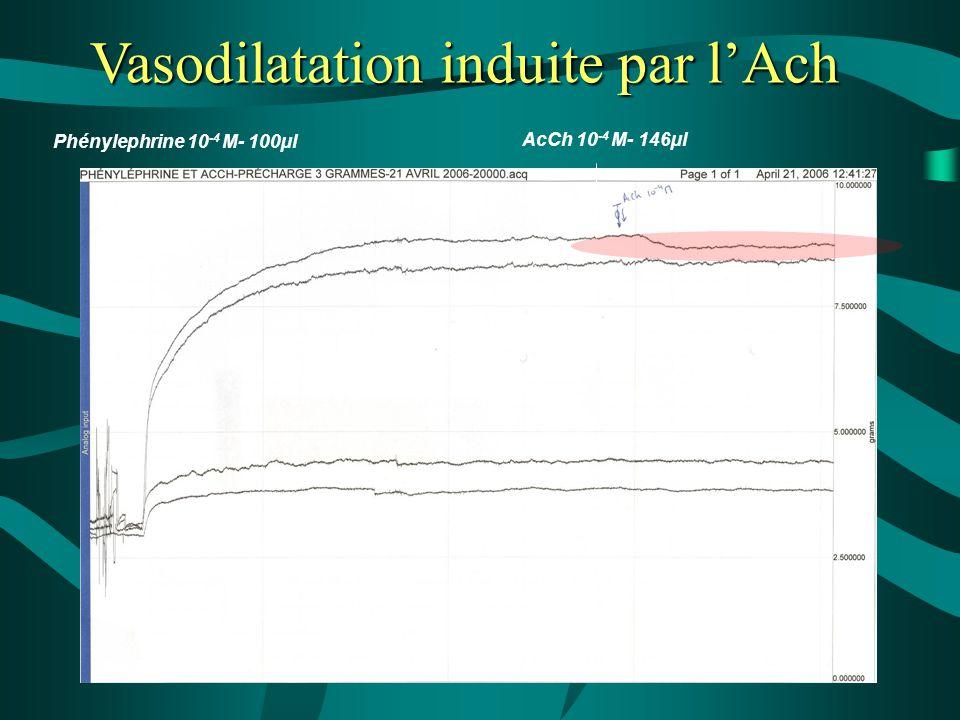 Vasodilatation induite par l'Ach