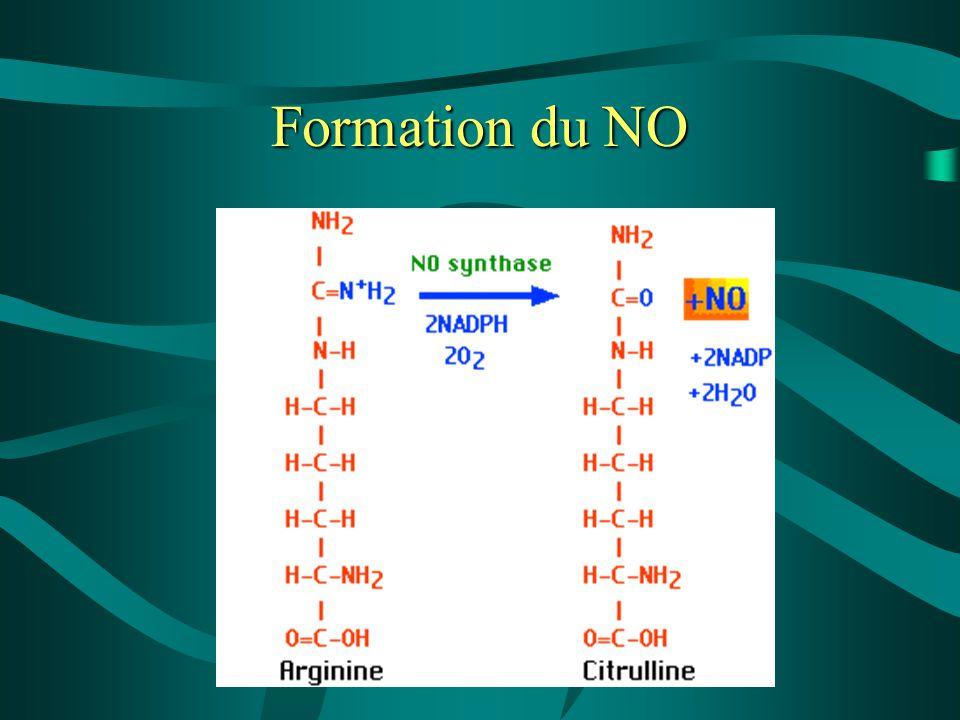 Formation du NO