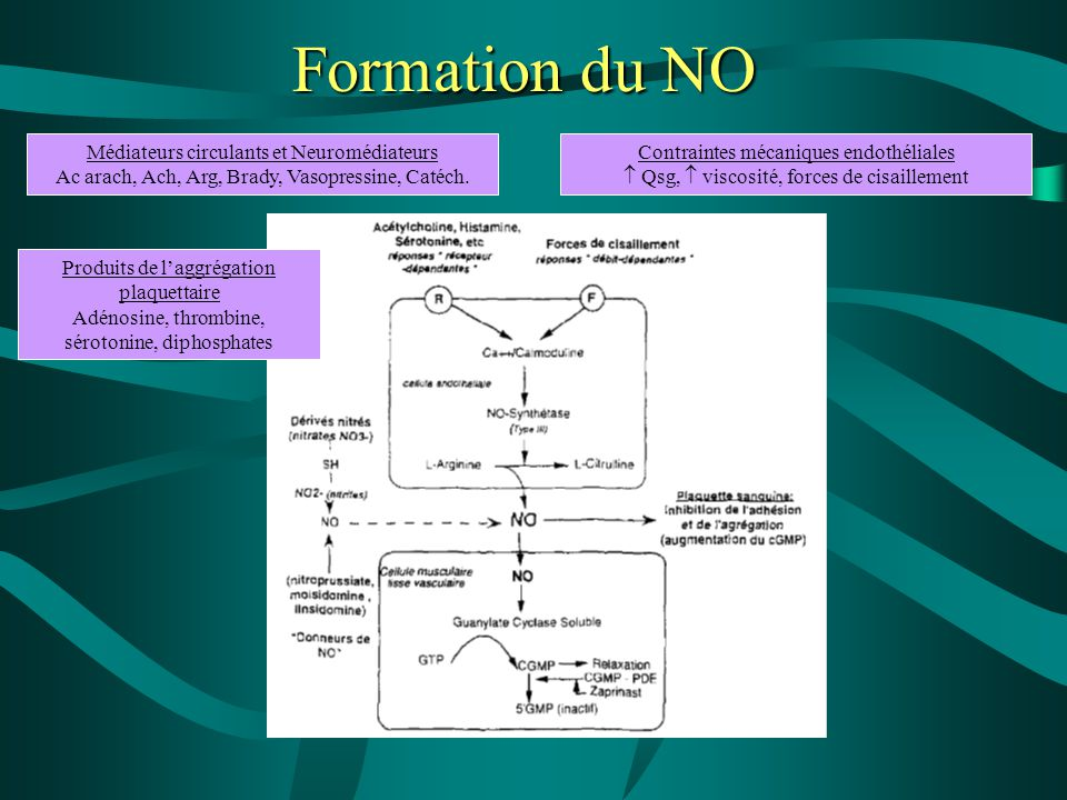 Formation du NO Médiateurs circulants et Neuromédiateurs Ac arach, Ach, Arg, Brady, Vasopressine, Catéch.