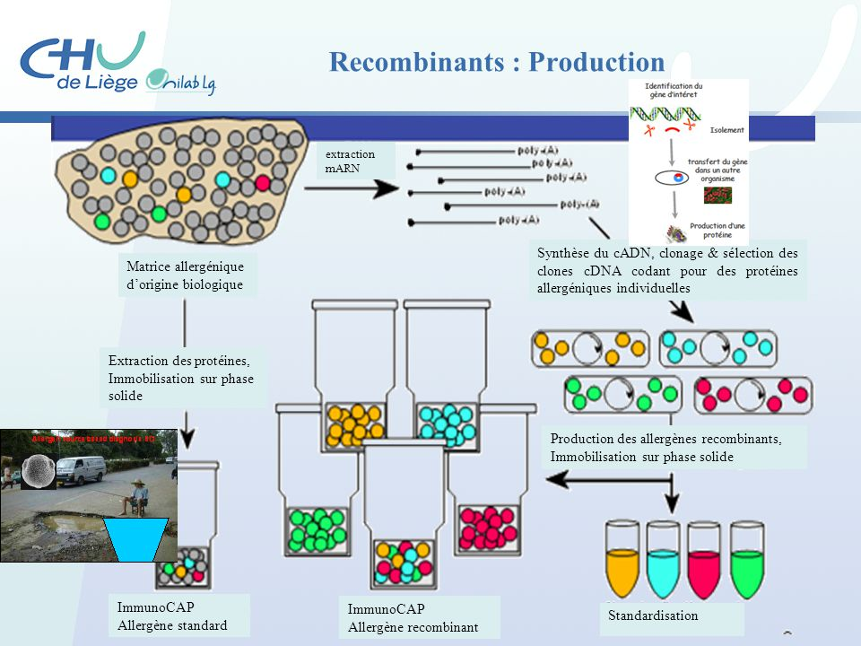Recombinants : Production