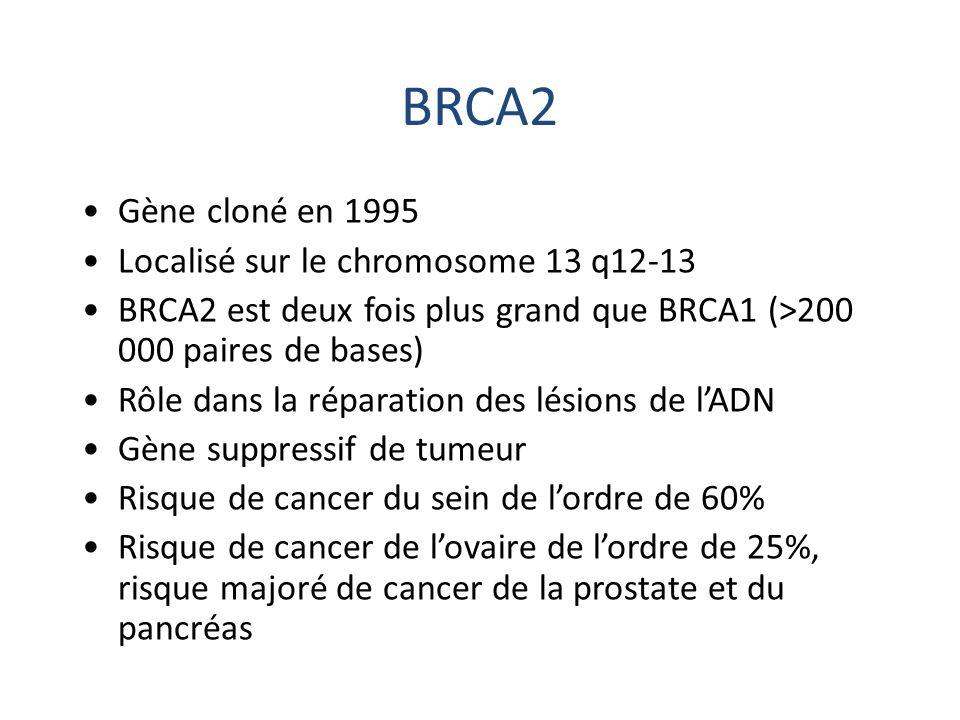 BRCA2 Gène cloné en 1995 Localisé sur le chromosome 13 q12-13