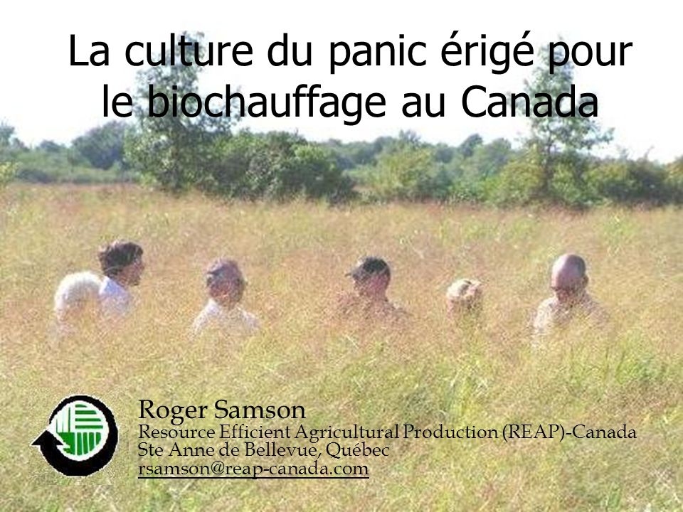 La culture du panic érigé pour le biochauffage au Canada