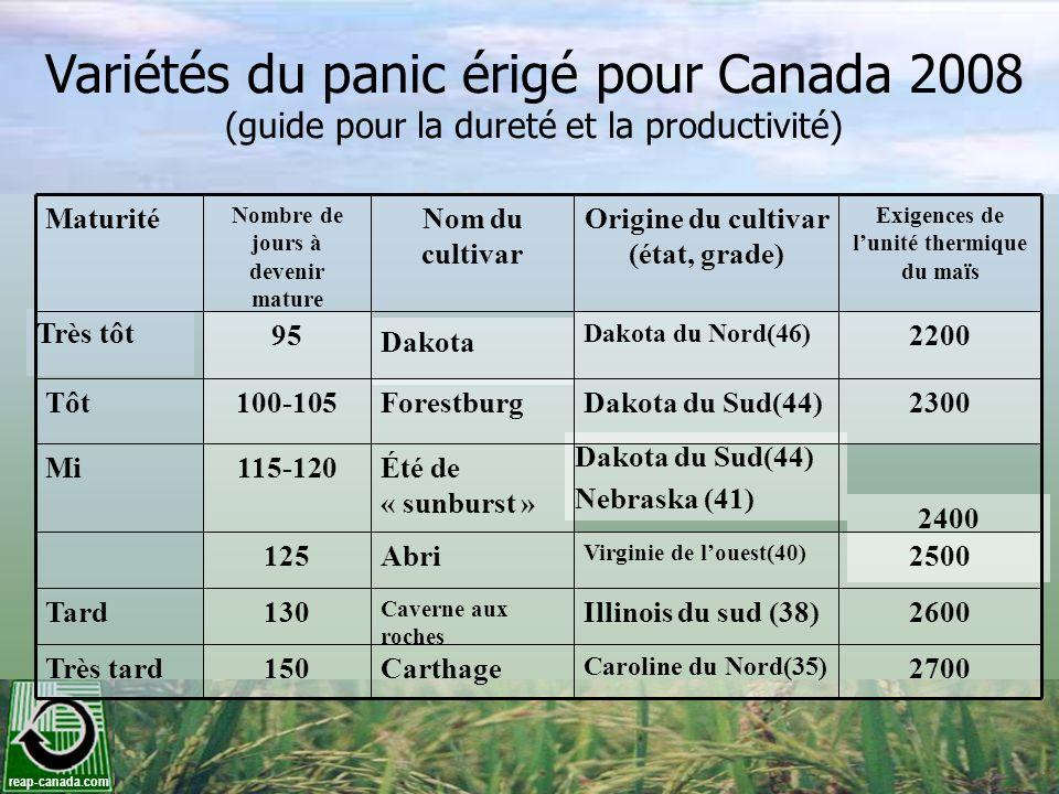 Variétés du panic érigé pour Canada 2008