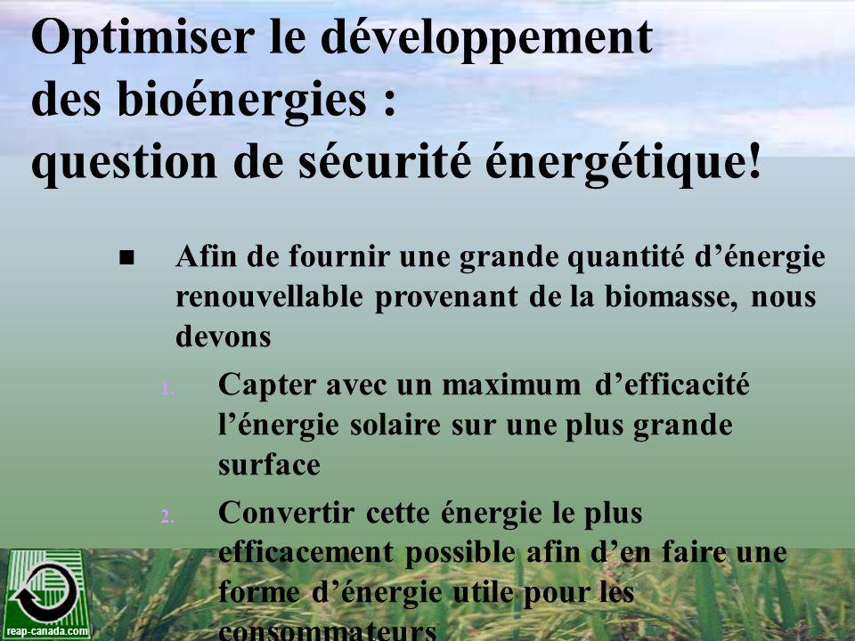 Optimiser le développement des bioénergies : question de sécurité énergétique!