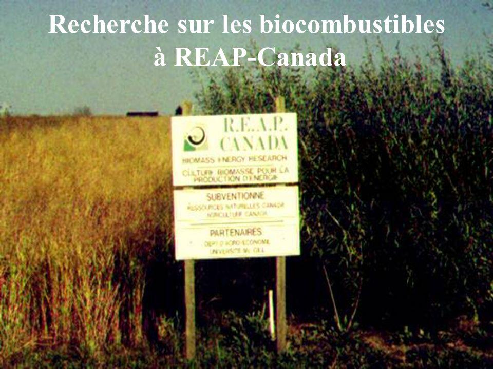 Recherche sur les biocombustibles à REAP-Canada