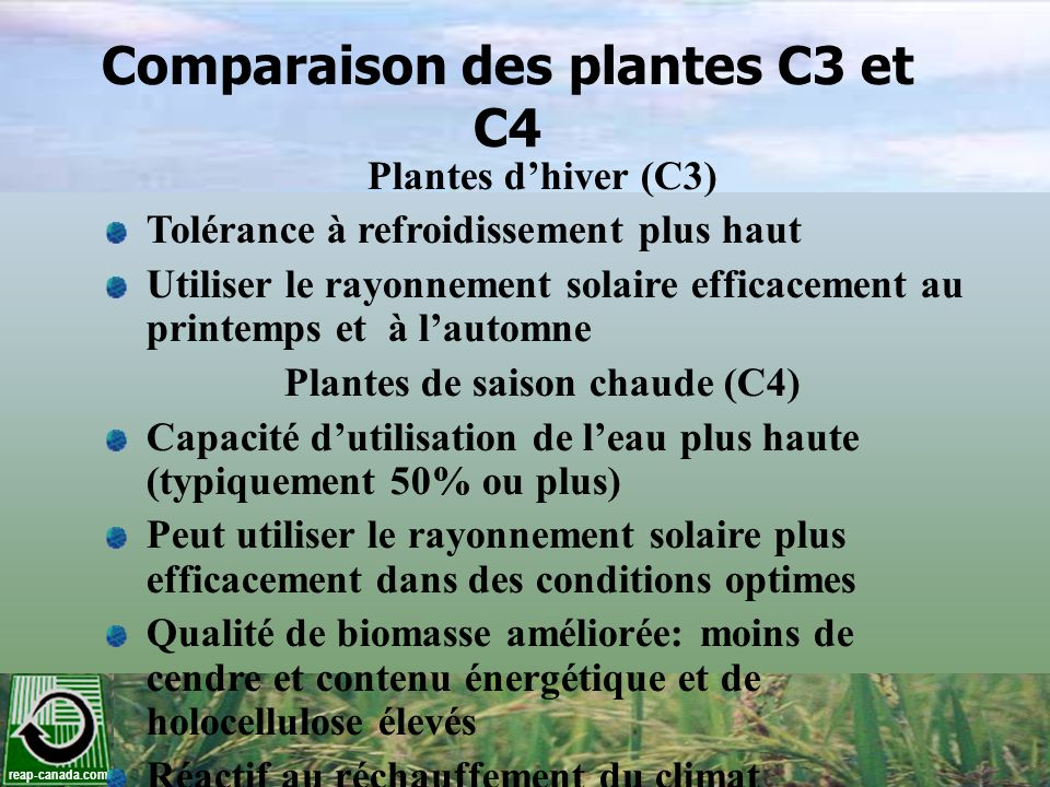 Comparaison des plantes C3 et C4 Plantes de saison chaude (C4)