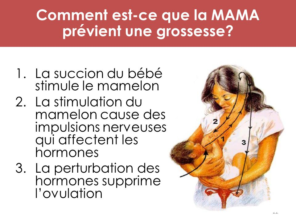 Mécanisme d'action de MAMA