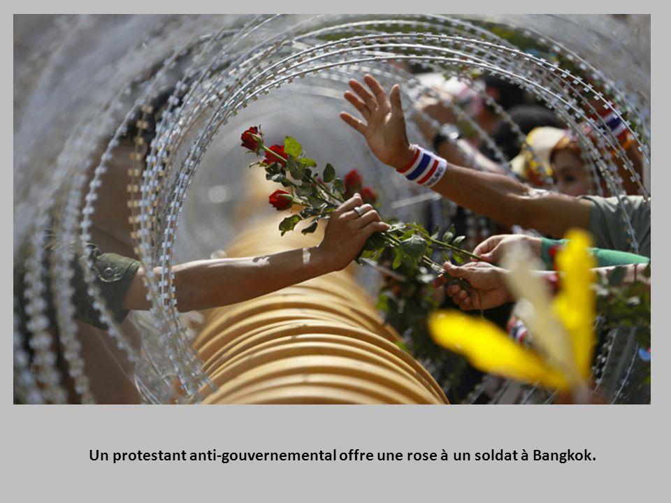 Un protestant anti-gouvernemental offre une rose à un soldat à Bangkok.