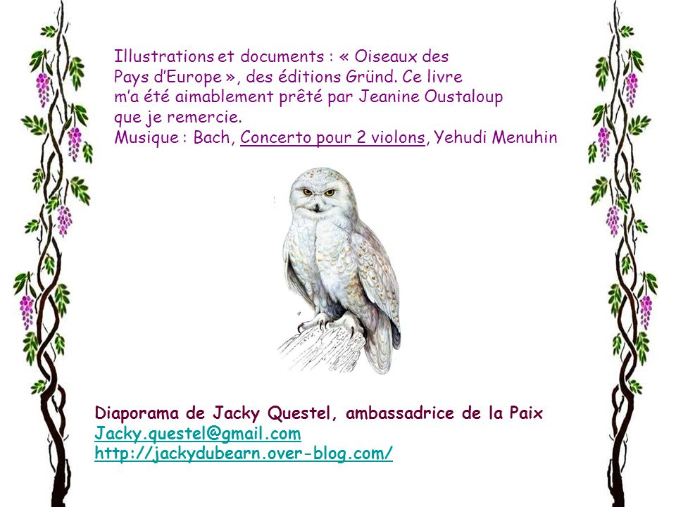 Illustrations et documents : « Oiseaux des