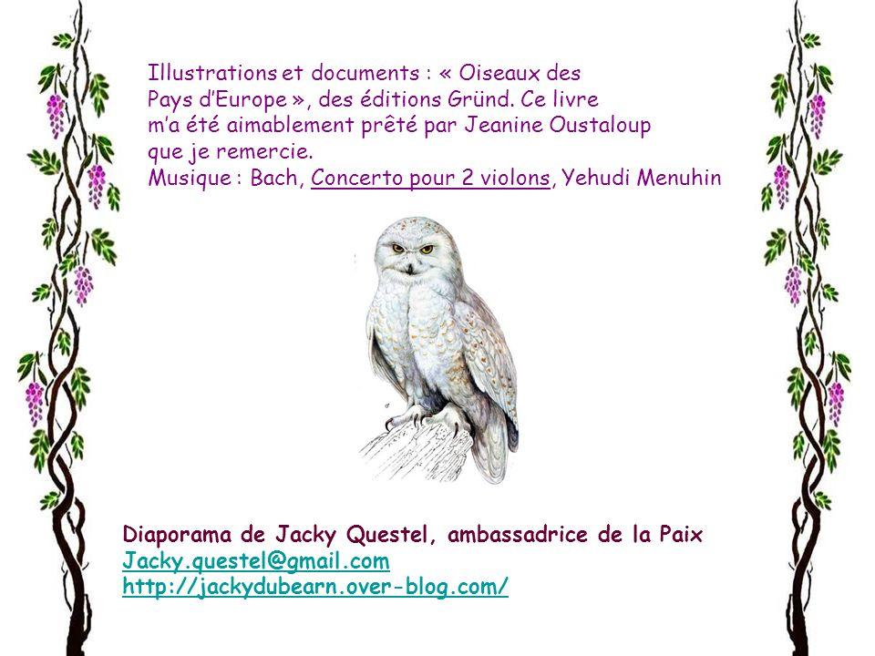 Illustrations et documents : « Oiseaux des