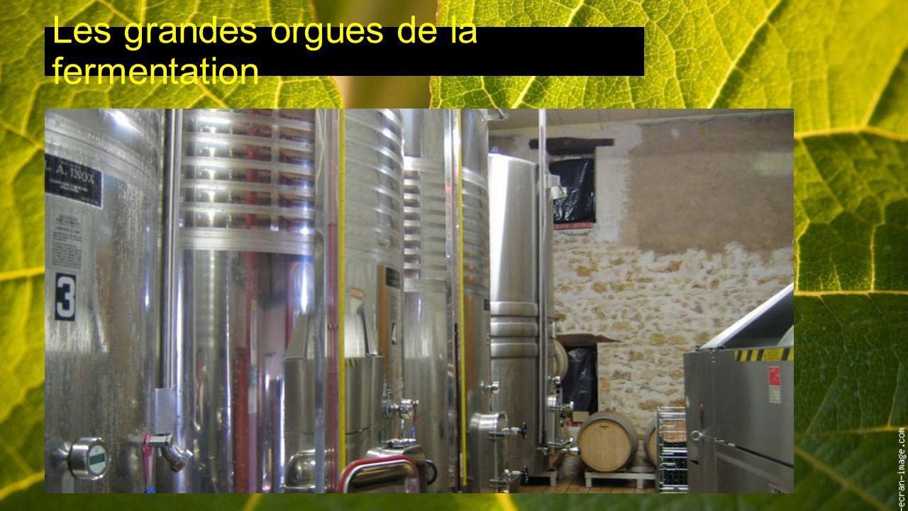 Les grandes orgues de la fermentation
