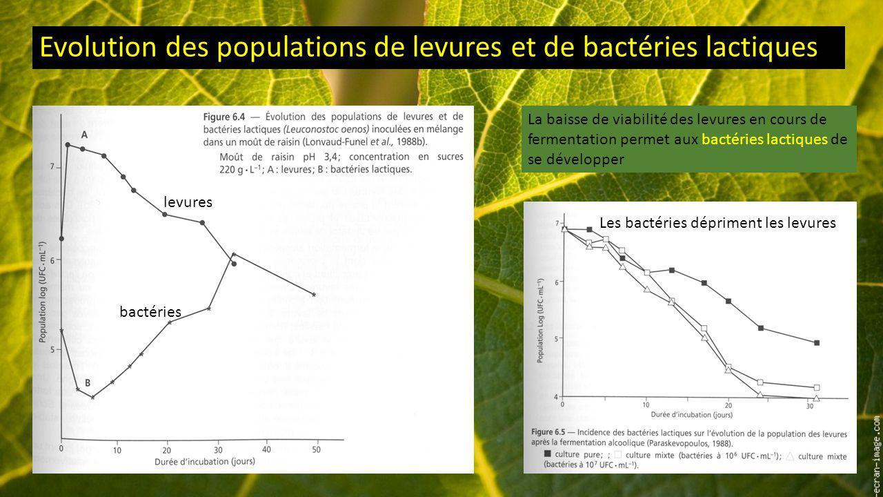 Evolution des populations de levures et de bactéries lactiques