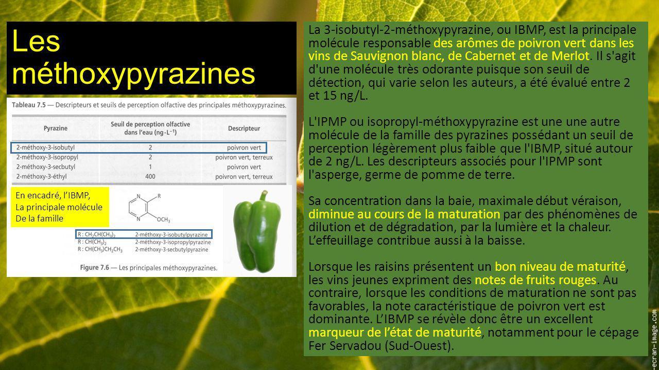 Les méthoxypyrazines
