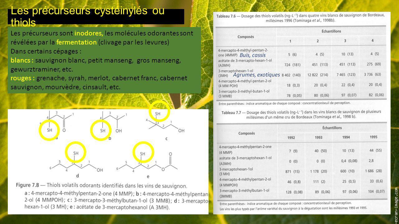 Les précurseurs cystéinylés ou thiols