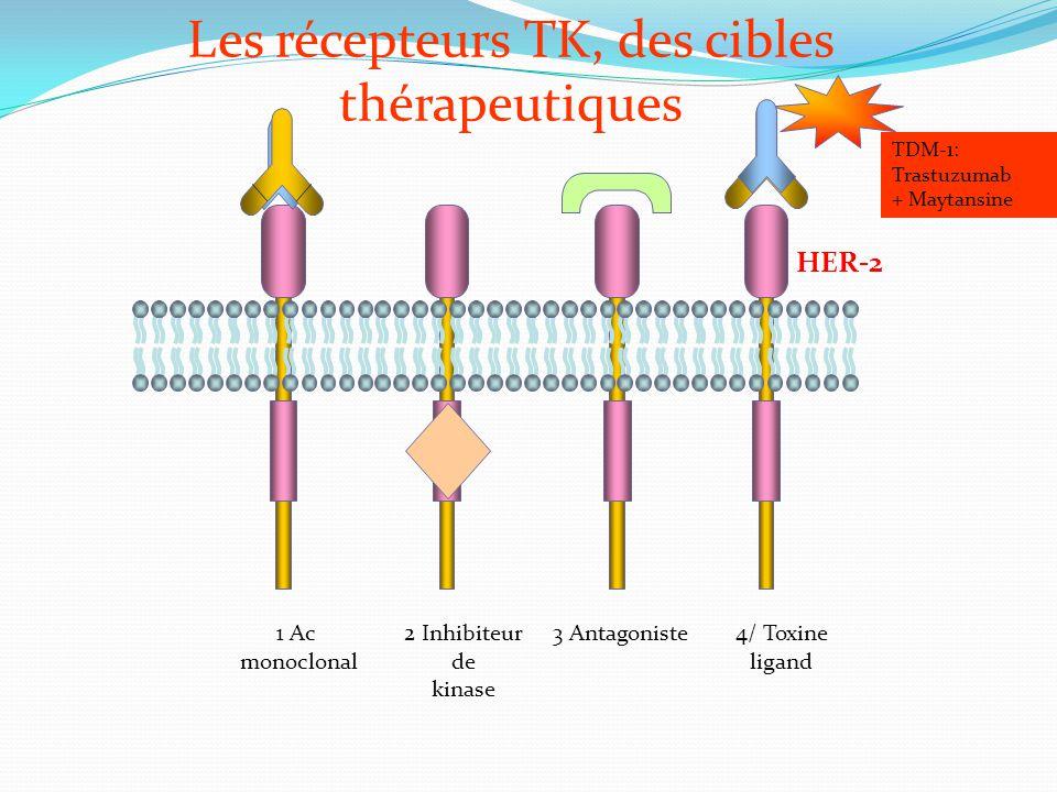 Les récepteurs TK, des cibles thérapeutiques