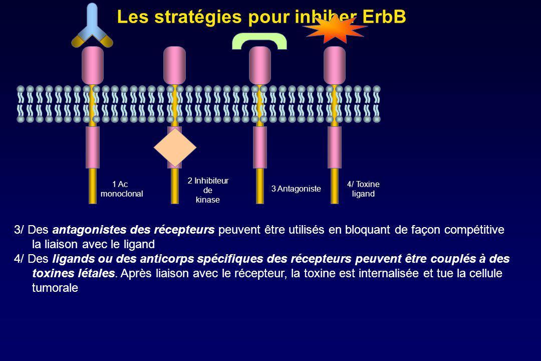 Les stratégies pour inhiber ErbB
