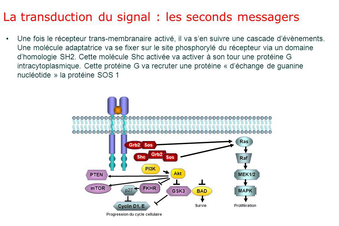 La transduction du signal : les seconds messagers