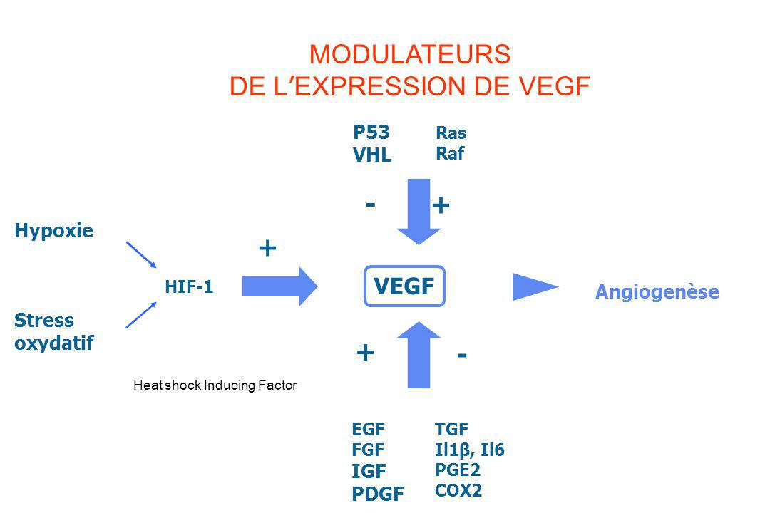 MODULATEURS DE L'EXPRESSION DE VEGF