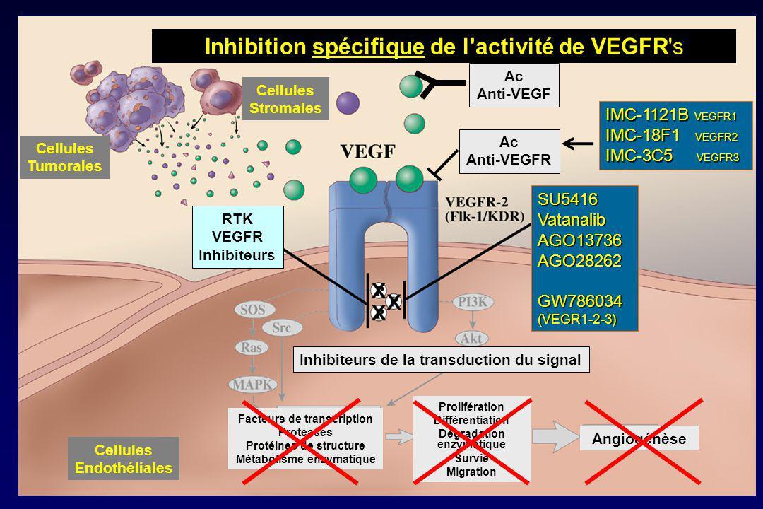Inhibition spécifique de l activité de VEGFR s