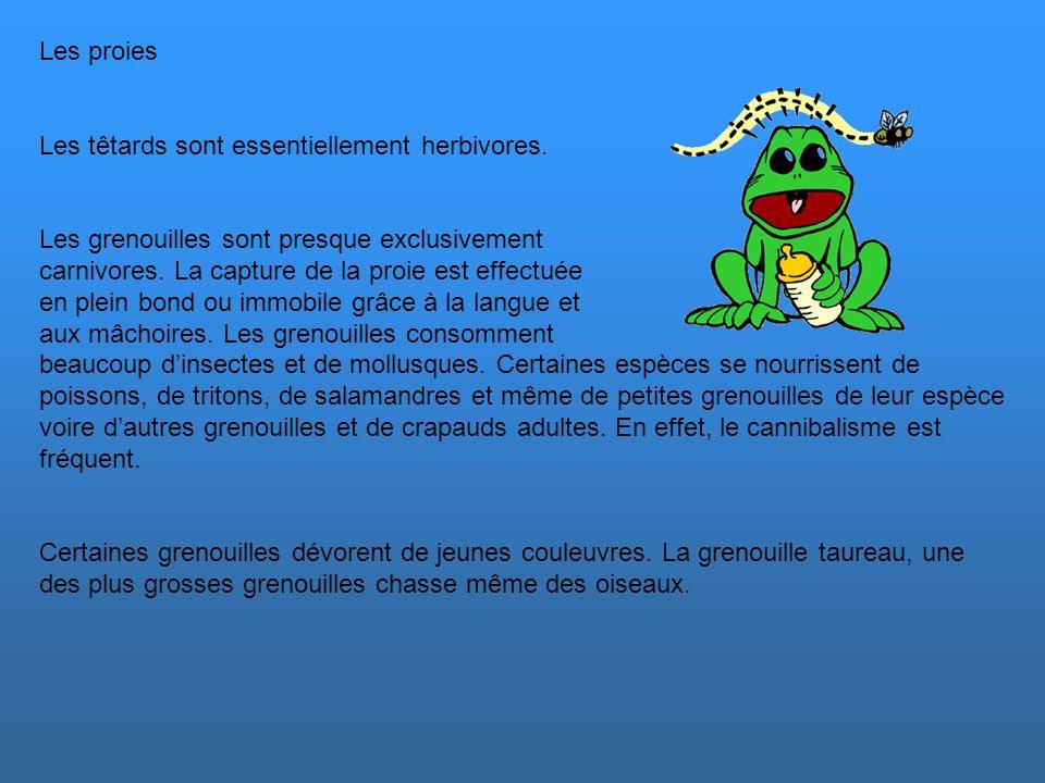 Les proies Les têtards sont essentiellement herbivores. Les grenouilles sont presque exclusivement.