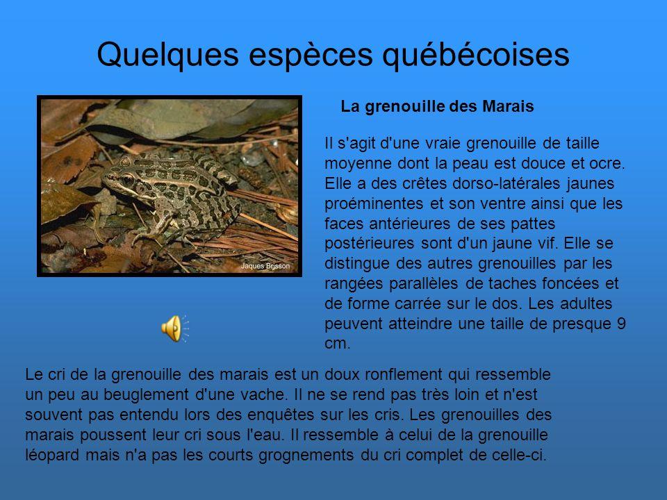 Quelques espèces québécoises