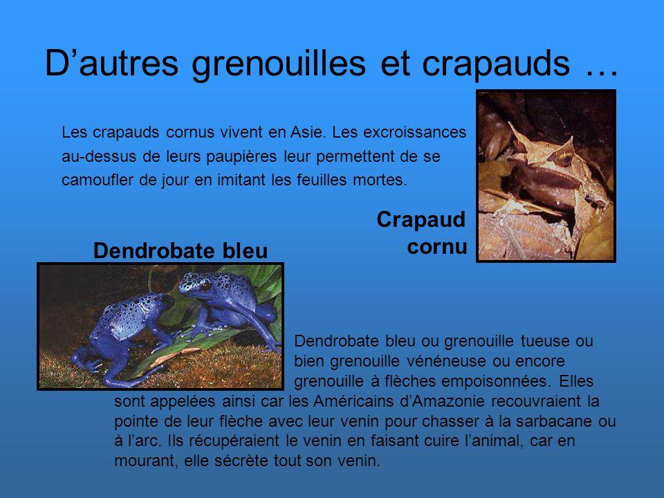 D'autres grenouilles et crapauds …