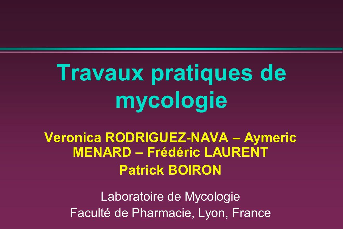Travaux pratiques de mycologie