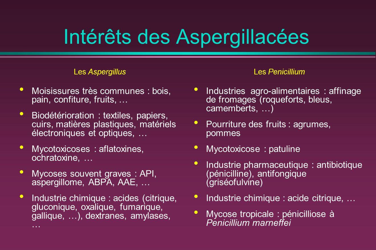 Intérêts des Aspergillacées